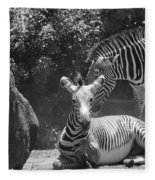 Zebras In Black And White Fleece Blanket