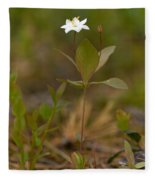 Arctic Starflower Fleece Blanket