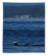 Southern Resident Orcas And Salmon Off The San Juan Islands Playing With Salmon Fleece Blanket