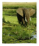 African Elephant In Swamp Fleece Blanket