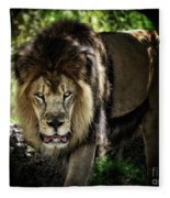 African Lion  Fleece Blanket