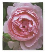 Alnwick Rose 1830 Fleece Blanket