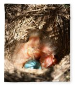 American Robin Nestlings Fleece Blanket