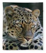 Amur Leopard #2 Fleece Blanket