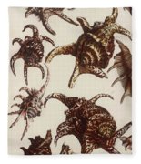 Aquatic Animals - Conch - Shells - Snails Fleece Blanket