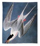 Audubon: Tern Fleece Blanket