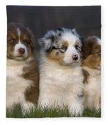 Australian Shepherd Puppies Fleece Blanket