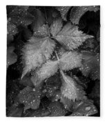 Bellevue Botanical Garden Leaves 6395 Fleece Blanket