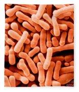 Bifidobacterium Animalis Fleece Blanket