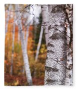 Birch Trees Fall Scenery Fleece Blanket