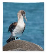 Blue-footed Booby On Rock Fleece Blanket