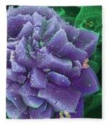 Calcium Oxalate Crystal In Cannabis, Sem Fleece Blanket