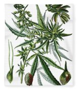 Cannabis Sativa Fleece Blanket