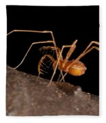 Cave Harvestman Fleece Blanket