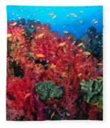 Coral Reef Scene Fleece Blanket