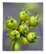Coriander C. Sativum, Maturing Seedpods Fleece Blanket