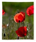 Corn Poppy Flowers Fleece Blanket by Nailia Schwarz