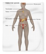 Endocrine System In Female Anatomy Fleece Blanket