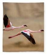 Greater Flamingos Phoenicopterus Roseus Fleece Blanket