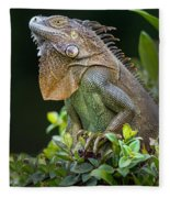 Green Iguana Iguana Iguana, Sarapiqui Fleece Blanket