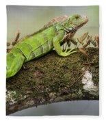 Green Iguana Iguana Iguana, Tarcoles Fleece Blanket