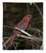Hepatic Tanager At The Coba Ruins Fleece Blanket