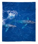 Humpback Whales Aerial Fleece Blanket