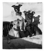 Italian Greyhounds In Black And White Fleece Blanket