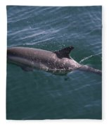 Long-beaked Common Dolphins In Monterey Bay 2015 Fleece Blanket