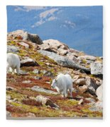 Mountain Goats On Mount Bierstadt In The Arapahoe National Forest Fleece Blanket