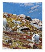 Mountain Goats On Mount Bierstadt In The Arapahoe National Forest Fleece Blanket
