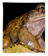 Noras Spiny Chest Frog Fleece Blanket