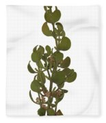 Pacific Mistletoe Fleece Blanket
