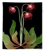 Pitcher Plant Flowers, X-ray Fleece Blanket