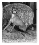 Portrait Of An Italian Greyhound In Black And White Fleece Blanket