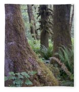 Quinault Rain Forest 3152 Fleece Blanket