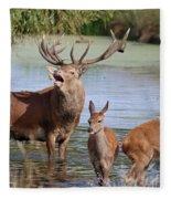 Red Deer In Bushy Park London Fleece Blanket