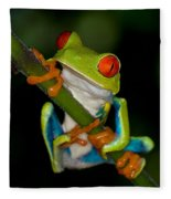 Red-eyed Green Tree Frog Hanging On Fleece Blanket
