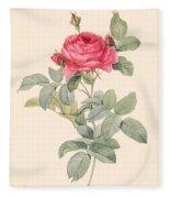Rosa Gallica Pontiana Fleece Blanket