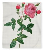 Rosa Indica Fleece Blanket