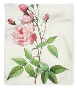 Rosa Indica Vulgaris Fleece Blanket