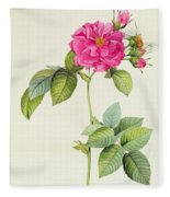 Rosa Turbinata Fleece Blanket