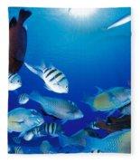Saipan Marine Life Fleece Blanket