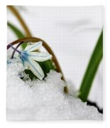 Scilla On Snow Fleece Blanket