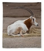 Scimitar Horned Dammah Fleece Blanket