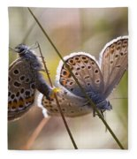 Silver-studded Blue Butterflies Fleece Blanket