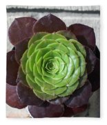 Succulent Rose Fleece Blanket