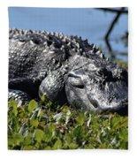 Sunning Gator Fleece Blanket