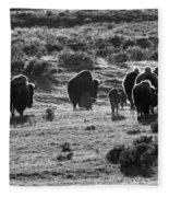 Sunset Bison Stroll Black And White Fleece Blanket