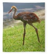 Sweet Juvenile Sandhill Crane Fleece Blanket